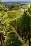Itinerario del vino nell'Alsazia Fotografie Stock