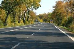Itinerario dell'asfalto fra gli alberi Fotografia Stock Libera da Diritti