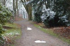 Itinerario di camminata della foresta nell'inverno Fotografia Stock Libera da Diritti