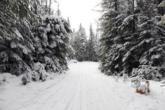 Itinerario di corsa con gli sci che attraversa il paese Fotografia Stock