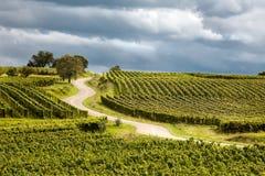 Itinerario du vin nell'Alsazia Francia Immagine Stock Libera da Diritti
