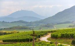 Itinerario famoso del vino l'Alsazia - in Francia Fotografie Stock