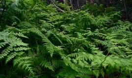 Itinerario Forest With Ferns - Sudafrica del giardino fotografia stock