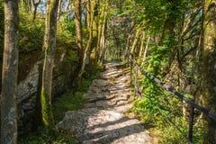 Itinerario turistico popolare nel boschetto del Tasso-legno di bosso nella riserva caucasica di biosfera, distretto di Soci, Russ immagine stock