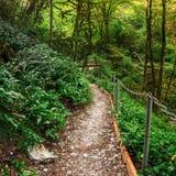 Itinerario turistico popolare nel boschetto del Tasso-legno di bosso nella riserva caucasica di biosfera, distretto di Soci, Russ immagine stock libera da diritti
