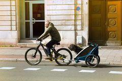 Itizen транспортирует собаку на велосипеде в специальном трейлере стоковые фото