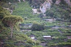 Сitrus crops Royalty Free Stock Photo