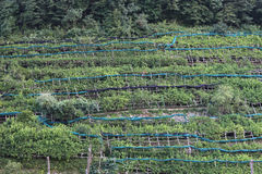 Сitrus crops Royalty Free Stock Photos