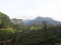 Its beautiful mountain and under the tea growings. This place situated in sabaragamuwa province in srilanka.under the nice tea growings stock images