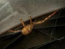 Itsy bitsy spider... stock images