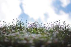 itsy bitsy wilde bloem royalty-vrije stock foto's