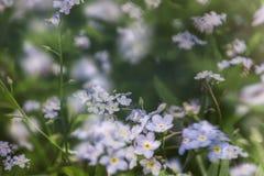 Ittle blauwe vergeet-mij-nietjes onder groene bladeren, in de de lentezon stock foto