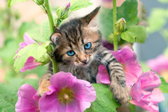 Little kitten in flowers Royalty Free Stock Photo