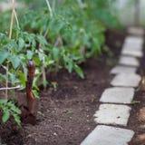 Ittle organic garden. Ittle organic/bio/permaculture garden Royalty Free Stock Photos