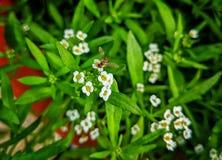 Itty bitty teeny weeny beezy pszczoła zdjęcia stock
