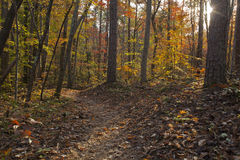 Itusi Trail. A sunset hike on the Itusi Trail in Lake Norman State Park Stock Photos