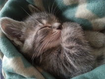 IV το γατάκι Στοκ Φωτογραφία