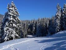 iv横向冬天 库存照片