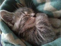 IV das Kätzchen Stockfotografie