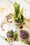 Ivan Tea Stock Images