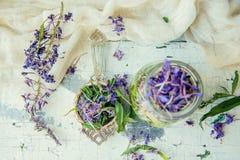 Ivan Tea Stock Photos