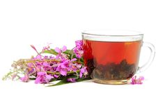 Ivan-tea on white Royalty Free Stock Photography