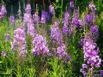 Sortie de floraison photos libres de droits