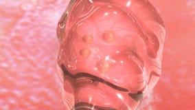 IVF płodu przeniesienie ilustracja wektor