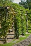 Ivied arbor in a garden Stock Photos