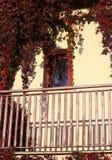 ivied fönster för hus Arkivfoton