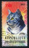 Tabby cat. IVORY COAST - CIRCA 2013: stamp printed by Ivory Coast, shows Tabby cat, circa 2013 royalty free stock photo
