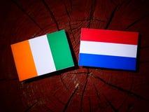 Ivory Coast flag with Dutch flag on a tree stump isolated Royalty Free Stock Photo