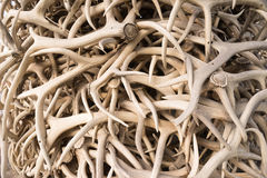Ivory Pile Elk Antlers Animal Horns Art Installation Royalty Free Stock Photo