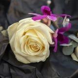 Ivory wedding rose buttonhole Stock Photography