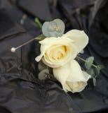 Ivory wedding rose buttonhole Stock Photo