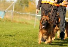 Ivrig hundspring Fotografering för Bildbyråer
