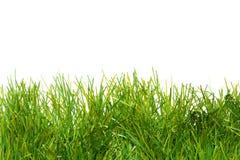 ivrogne artificiel de vert d'herbe Photographie stock