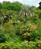 ivrogne de feuillage tropical Images libres de droits