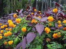 Ivrogne et paysage de floraison au tourisme naturel photo stock