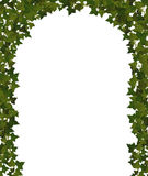 Ivy arch. Arch of climbing plant vines vector illustration