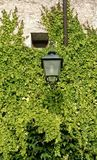 Ivy around street lamp. Wall with ivy around street lamp Stock Photo