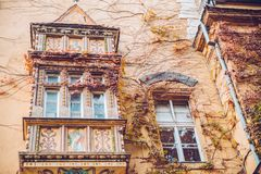Ivy in autumn day at old building. Ivy in autumn day on old building Royalty Free Stock Photo