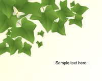 Ivy background, cdr vector royalty free stock photography