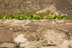 Ivy at the backgroung of old castle wall with rocks Royalty Free Stock Photo