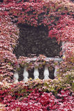 Ivy and balcony. A balcony completely surrounded by red ivy in autumn royalty free stock photo