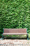 Ivy and Bench a la Portrait Stock Image
