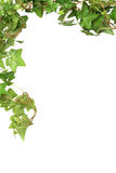 Ivy Border Royalty Free Stock Photography