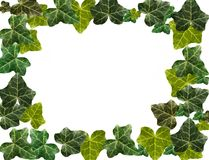 Ivy border Royalty Free Stock Photos