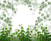Ivy Border background or Frame Stock Image
