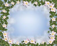 Ivy Border with Plumeria Stock Images